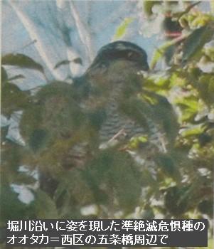 160220horikawa2